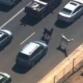 Lama en fuite en Arizona (Etats-Unis) #Teamllama